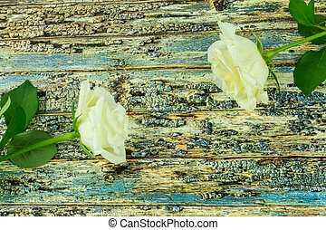 White roses on a colored wooden background