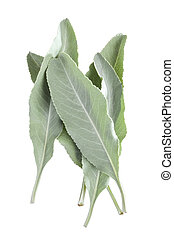 White sage leaves - Closeup of small pile of five fresh...