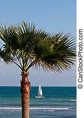 White Sailboat on Sea Past Palm Tree