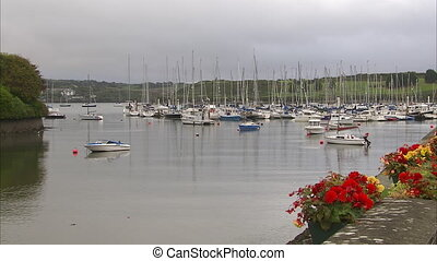 White sailboats in harbor - A wide shot of white sailboats...