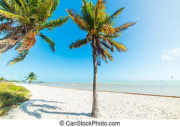 White sand and coconut palm trees in Smathers Beach in Key West