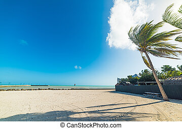 White sand and palm trees in Higgs beach in Key West