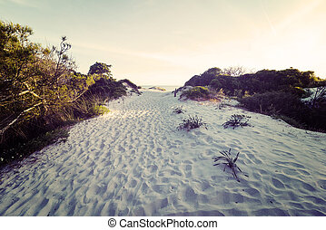 white sand at sunset