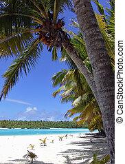 White Sand Palm - Beach on Aitutaki