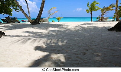 White sand under the shade of palm trees. Beach in the...