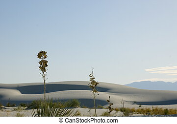 White Sands National Monument at su