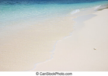 A piece of coral on a pristine stretch of white sandy beach in Malaysia