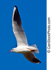 white sea gull