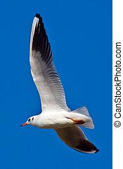 white sea gull
