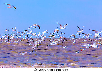 gulls fly over the waves