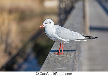 White seagull on urban background.