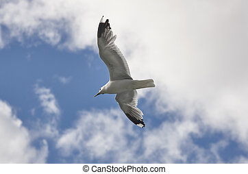 White seagull over a blue sky. Nature background.