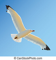 White seagull soaring in blue sky - White seagull soaring in...