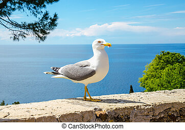 White seagull standing on a stone wall