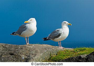 White Seagulls With Yellow Beak