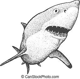 White Shark Engraving Illustration