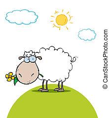 Sheep Eating A Flower On A Sunny Da