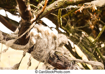 sheeps wool hanging on a tree