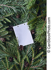 White sheet for text on a Christmas background of green spruce and pine branches