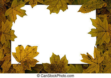 white sheet on a background of autumn leaves