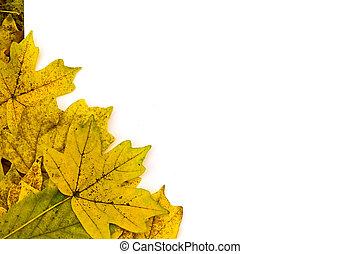 white sheet on yellow autumn leaves