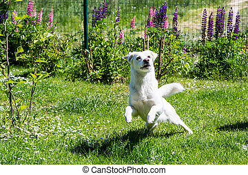 White shelter dog on a meadow in the garden