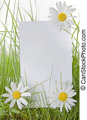 White Sign Amongst Grass and Daisy Flowers