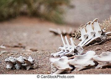 White skeleton of an dead animal. Danger of Gobi desert