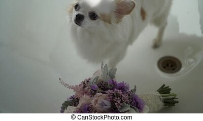 White small dog with bouquet - White small dog with bridal...
