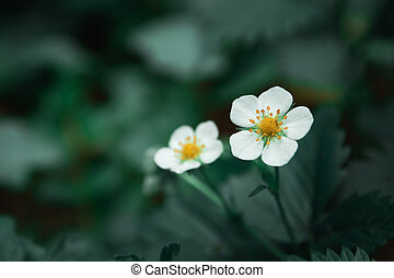 White small forest flowers on a dark green background