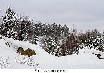 White snow covered trees in the winter forest.