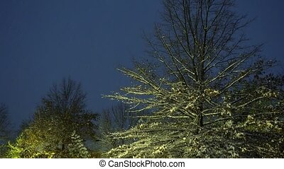 White snow covers trees and branches in the cold winter