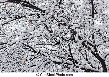 White snow on the branches of a tree in winter