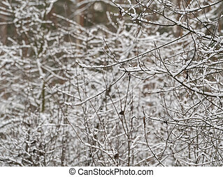 White snow on tree branches in the winter forest.