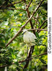 white Snowy Egret on branch