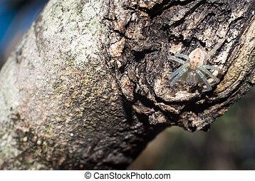 white spider on trunk