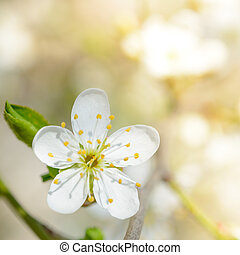 White Spring Flower in Bright Sun Light on Bright Blurred Background