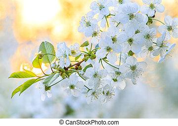 white spring flower in the morning rays