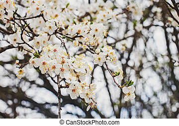 White spring flowers on a tree branch close-up