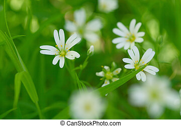 white spring flowers nature background