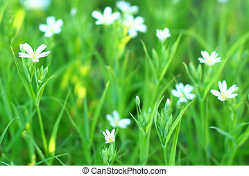 white spring flowers vegetation background