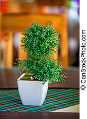 white square pot with a green small tree on the table