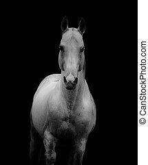 white stallion over the dark background