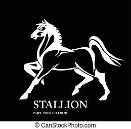White stallion. white horse.