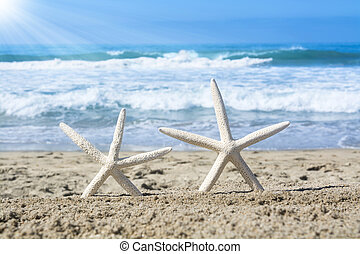 White starfish on beach