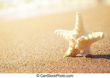 White starfish on sunny tropical beach