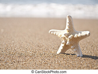 White starfish on tropical sand beach