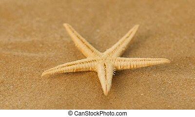 White, starfish, sea, rotation, closeup - White, starfish,...