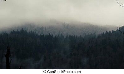 White Steam Boils From The Thicket - White Steam Or Fog...