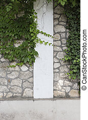 White stone wall and green climber.